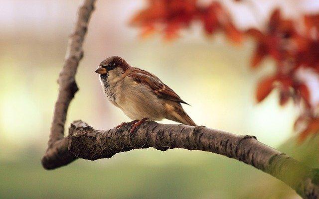 bird-g161f72580_640