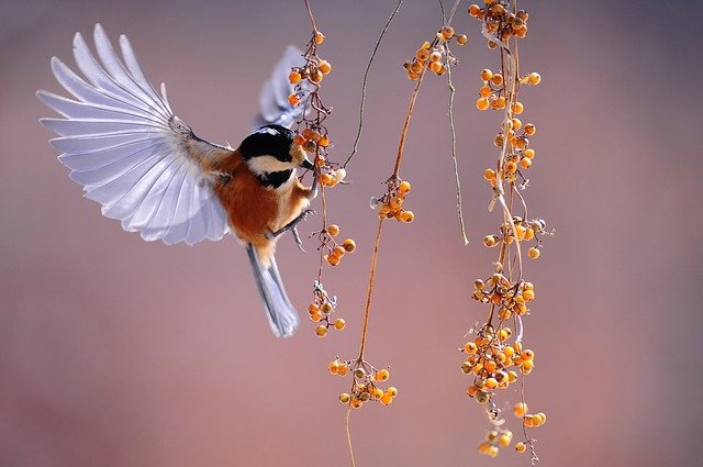 bird-g2a918b838_640
