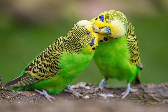 dvojice ptáků
